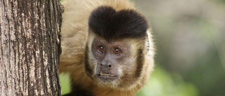 InfoNavWeb                       Informação, Notícias,Videos, Diversão, Games e Tecnologia.  : Febre amarela provoca caça e morte de macacos