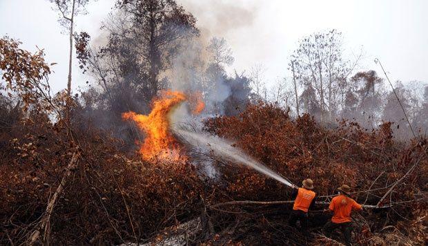 Polda Riau: Dua korporasi tersangka pembakar hutan