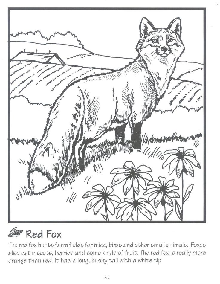 free red fox coloring pages - photo#28