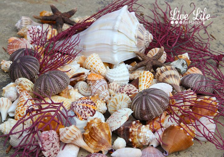 Sanibel Island is known as one of the best shelling places in the world. The island's sloping incline and East West positing make perfect...
