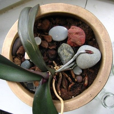 Orchid Soil And Growing Mediums