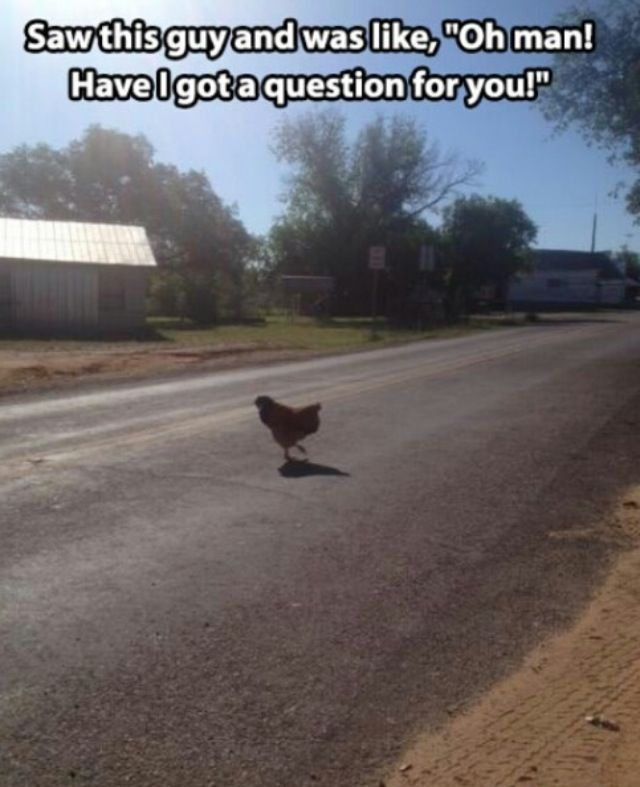 15 Best Why The Chicken Crossed The Road Images On Pinterest The
