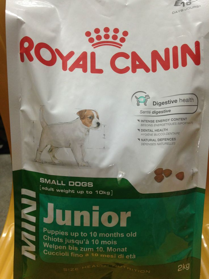 Mangime Completo Cuccioli Piccola Taglia Mini Junior Royal Canin http://www.ebay.it/itm/Mangime-Completo-Cuccioli-Piccola-Taglia-Mini-Junior-Royal-Canin-/281458547528?pt=IT_Stanza&hash=item41883c9b48