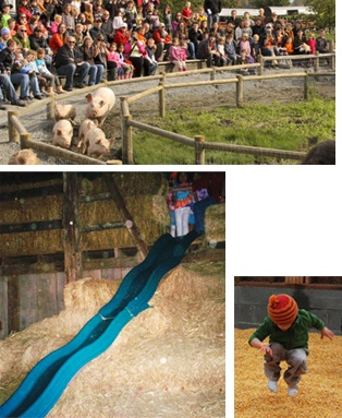 Our three-story hay slide, Live pig races, The corn box, wagon rides, petting farm, corn maze, pig show, pumpkin patch, hay maze, rubber duck races, hay barn, hay jump, fishing, gold panning, critter swings, cow train, and sand diggers are all fun Fall Festival activities at The Farm at Swan's Trail in Snohomish, Washington, northeast of Seattle.