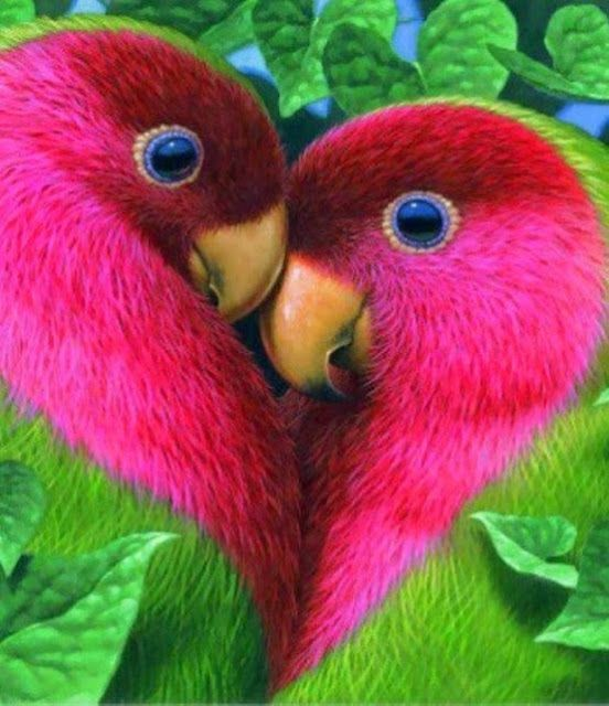 No wonder there called lovebirds--Yes these are actually what real lovebirds look like!
