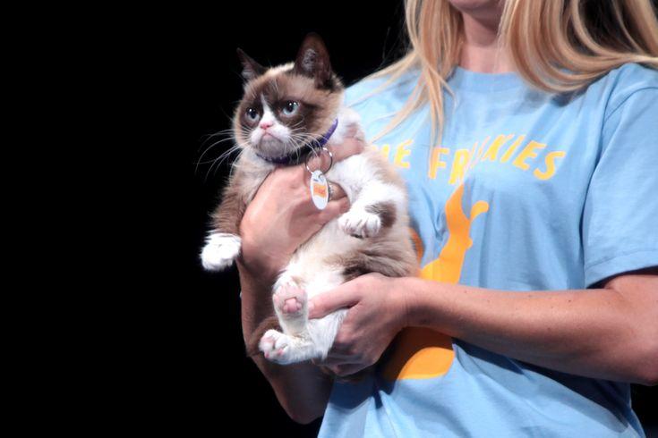 Grumpy Cat, de kat die bekend staat om zijn chagrijnige gezicht, is nu te zien op Broadway!
