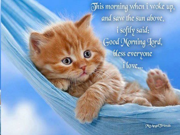 Good Morning Quotes Cat : Good morning kitty with message pinterest