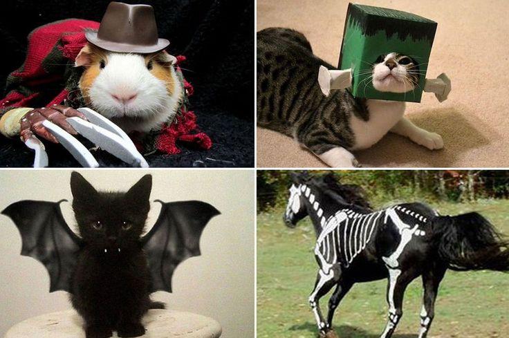 30 Fancy Animal Halloween Costume for 2014