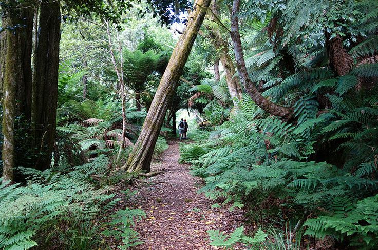 The Rainforest Track at Mount Gulaga, which leads to the summit of the mountain