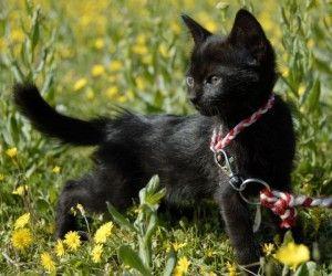 Katzengeschirr: Mit dem Stubentiger Gassi gehen?