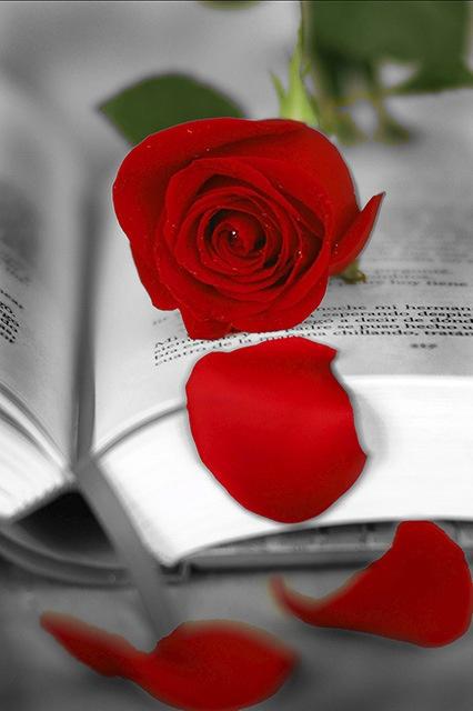 Sant Jordi, patrón de Catalunya, día de rosas y libros que se regalan a las personas queridas.