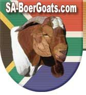 Home page of South African Boer Goats - in South Africa  #goatvet also has good advice on http://www.goatvetoz.com.au