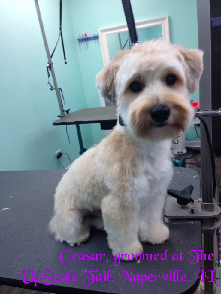 46 best grooming images on pinterest dog grooming business dog the upscale tail pet grooming salon naperville il 630 632 tail solutioingenieria Choice Image