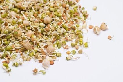 How to Grow Alfalfa Seeds thumbnail