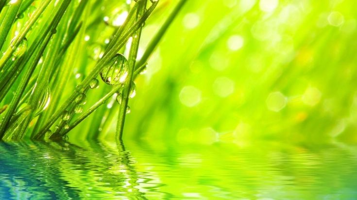 Water Drops on Grass Wallpaper