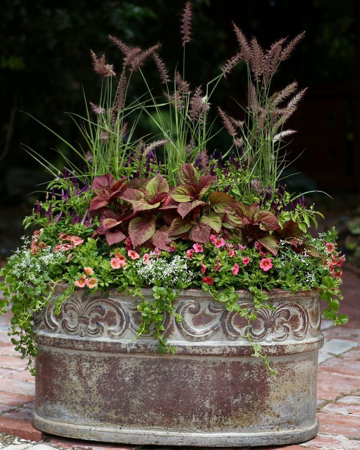 nice Sometimes a container does not need a variety of colors. Try using plants with t...