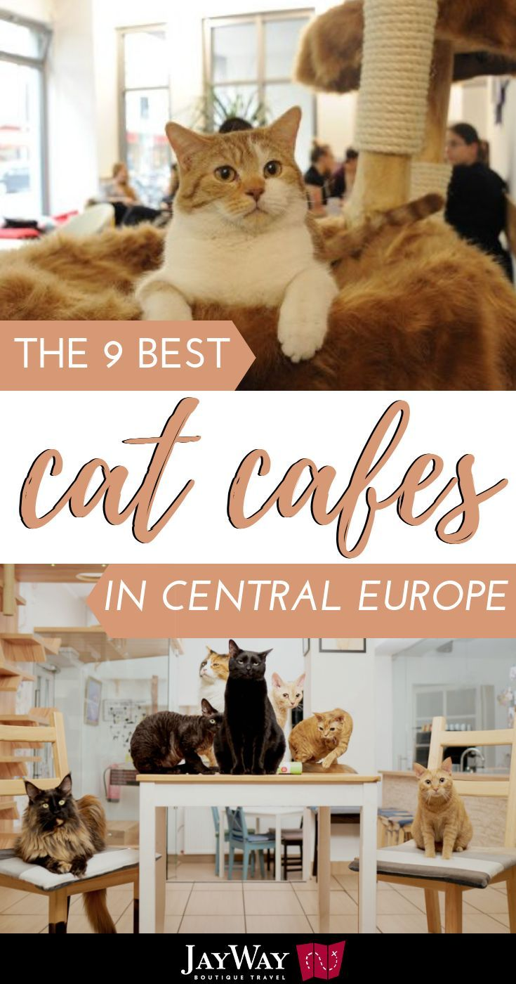 I Mean Who Doesn T Like Coffee Or Cats And Even Better When Combined You Might Not Know That You Can Find Cat Cafe Central Europe Europe Travel Destinations
