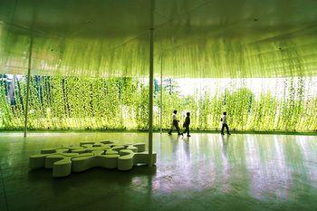 2007年に行なわれた 日比野克彦さんの「明後日(あさって)朝顔プロジェクト21」という試み。朝顔が窓に沿ってひさしを作り出した緑豊かなステキ空間。心地良さそう♡。