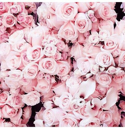14 best roses flowers images on pinterest beautiful flowers welcome to classy and style mightylinksfo