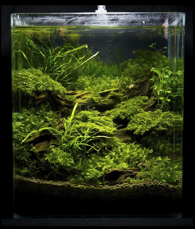 """Germany 2011 """"Art of the planted tank"""" Landscaping plants Competition Results - Swamp House cylinder"""