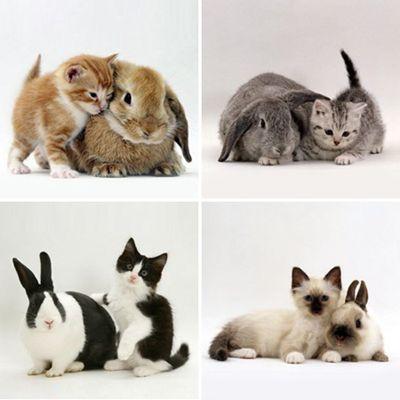 :-oTwin, Rabbit, Cat, Identity Theft, Pets, Baby Animal, Kittens, Bunnies, Cutest Animal