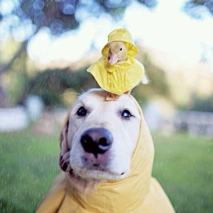 Funny Rainy Day Meme : Funny rainy day images imgkid the image kid