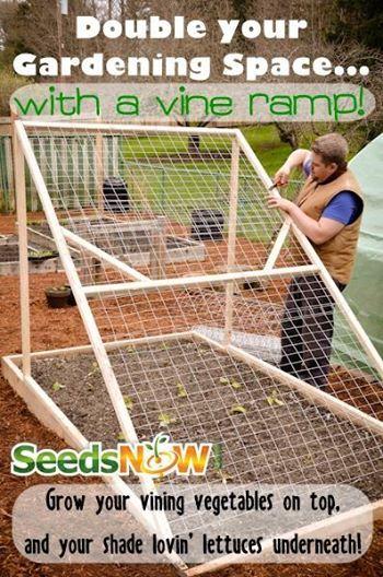 garden vine growing ramp - Google Search