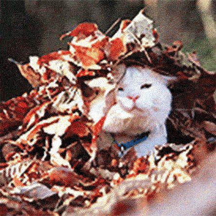 jordan shoes release dates june 2012 cute cat under leaves