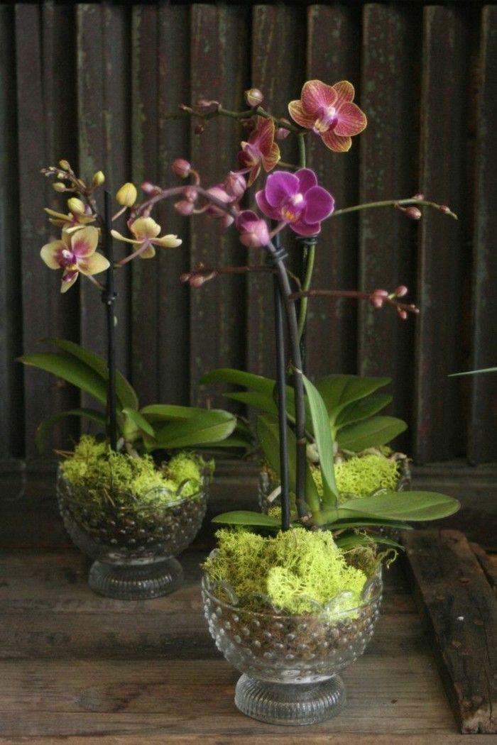 11 pflegeleichte Zimmerpflanzen und Heilkruter mit denen