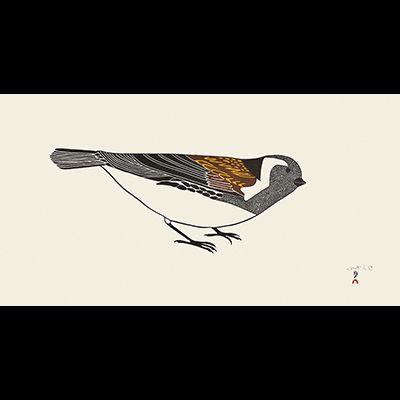 Timmiaralaaq ( Little Bird )