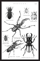 BEETLES Tavla 0000152852