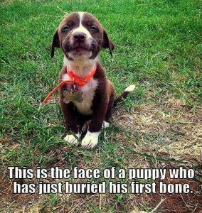 He's so proud! Happy day! #cute #adorable #dogs #puppies #doglovers
