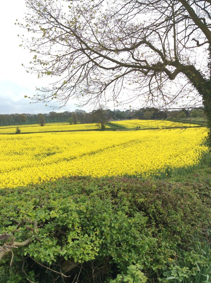 Great Brington dressed all in yellow