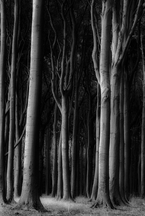 Ralph Graef | Ghost Grove. I love how this image has such a dark, mysterious feel, very exaggerated by it's being edited into black and white.