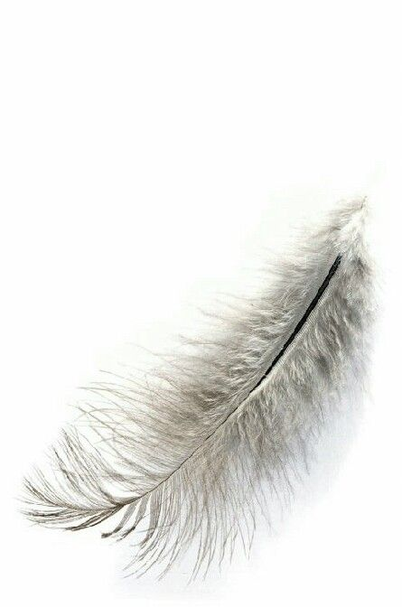 feathers #feather #feathers