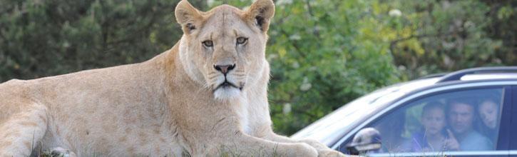 GIVSKUD ZOO | Løveparken | zoologisk have | nær Billund | Safaripark