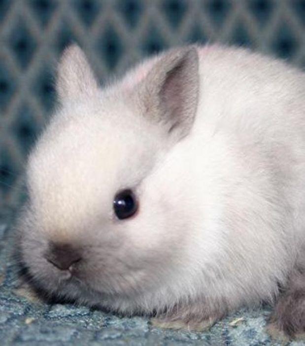 Ce bébé lapin blanc a une frimousse qui fait craquer