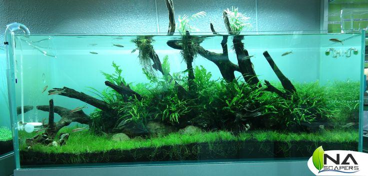 Paisaje con vegetación emergido.  Tank with emerged plants.