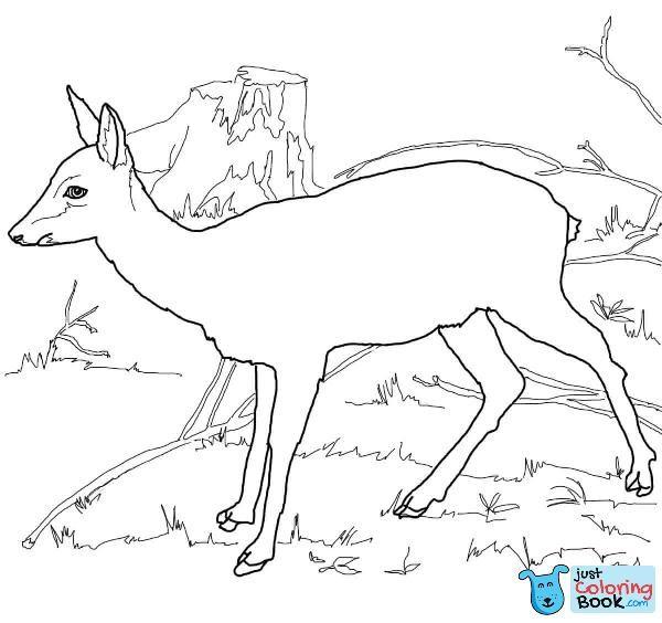 Roe Deer Coloring Page Deer Coloring Pages Free Printable