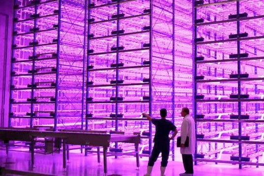 Indoor Vertical #Farm 'Pinkhouses' Grow #Plants Faster With Less #Energy    Read more: Indoor Vertical Farm 'Pinkhouses' Grow Plants Faster With Less Energy | Inhabitat - Sustainable Design Innovation, Eco Architecture, Green Building