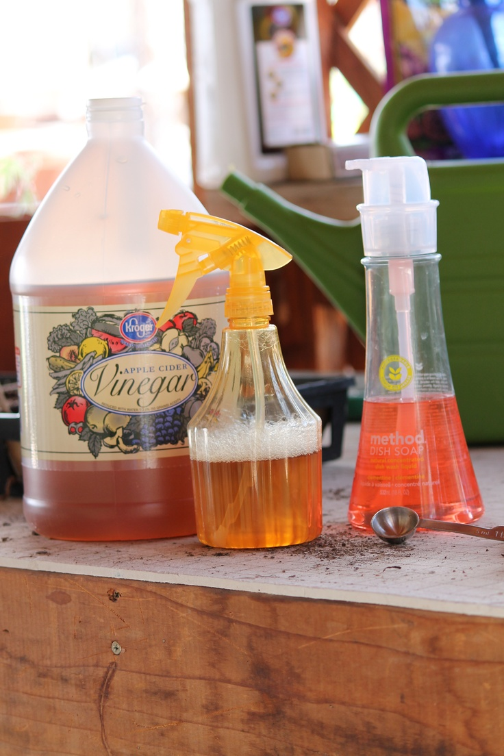 Can vinegar really kill weeds?  You betcha! 4 C. Apple Cider Vinegar  1 t. Dish Soap (not Dawn)  Mixed in a spray bottle.  Add soap, then vinegar.  Don't shake (BUBBLES) And, to be most effective, the mix should be sprayed in the middle of a warm or hot, calm day.