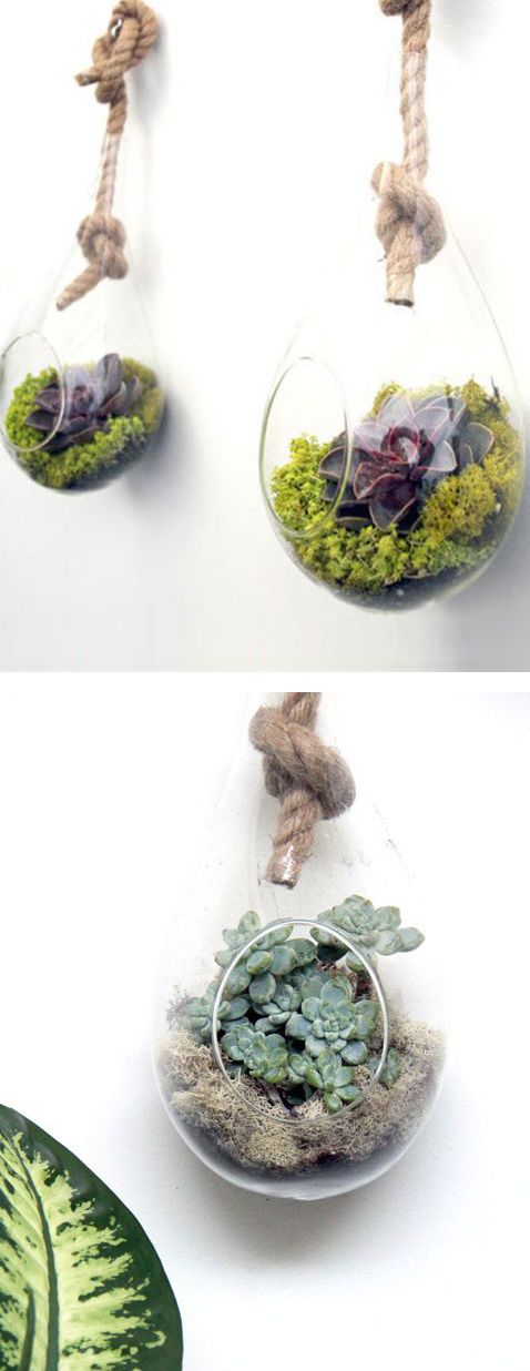 Knot So Fast Terrariums aka Rope Planters #Indoor_Garden #Herbs #Trinity_Realty #Whittier_Real_Estate #Whittier_Condos #Whittier_Homes_For_Sale - Trinity Realty and Investment at Whittier Real Estate ...