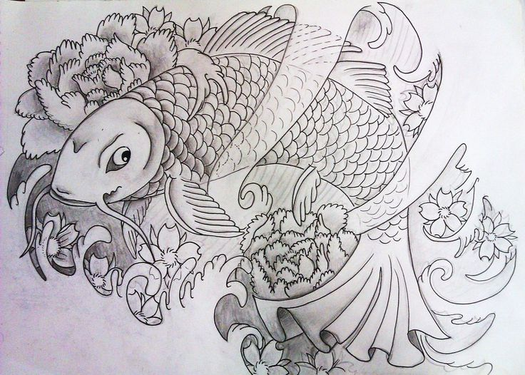 Coy Fish Coloring Pages Printable Sheet Anbu
