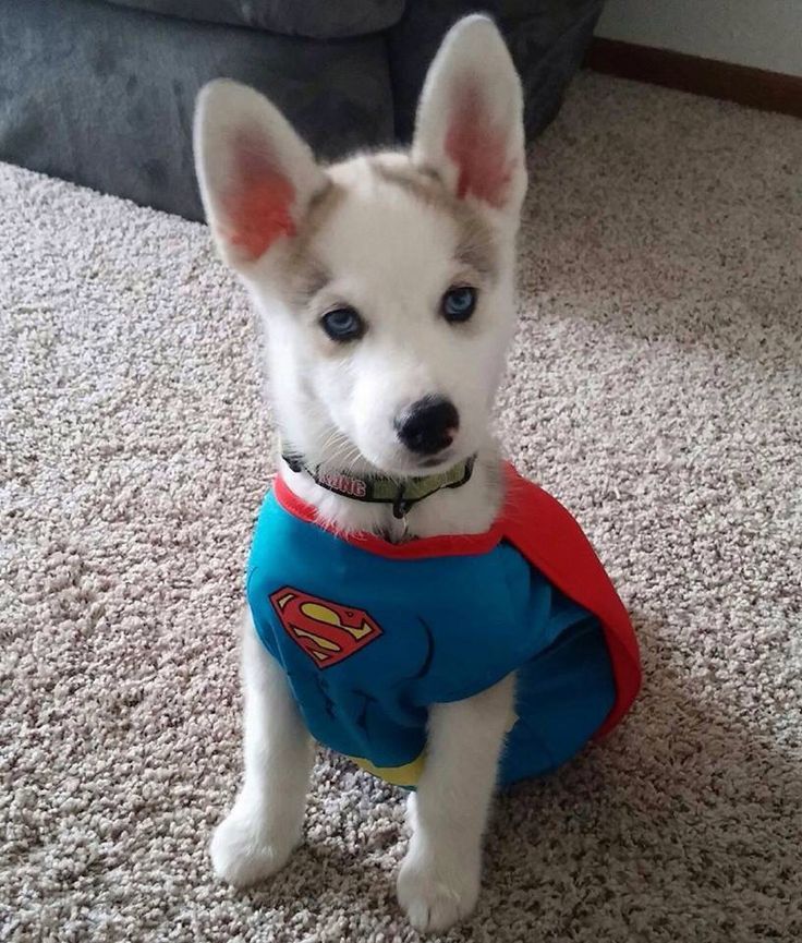 Super Doggie