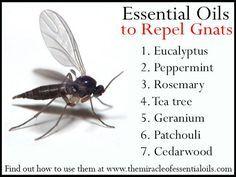 25 Best Ideas About Gnat Repellant On Pinterest Gnat