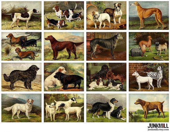DOG BREEDS - Digital Printable Collage Sheet - Antique Dog Illustrati ...