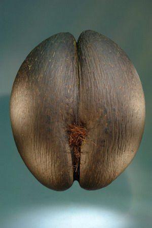 Coco de mer erotic