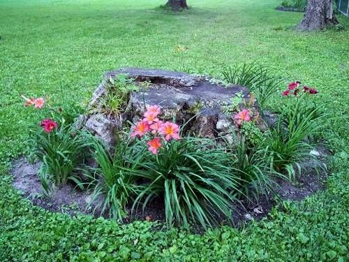 25 ideas to recycle tree stumps for garden art and yard for Tree landscaping ideas