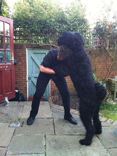 Enormous pets: russian black terrier
