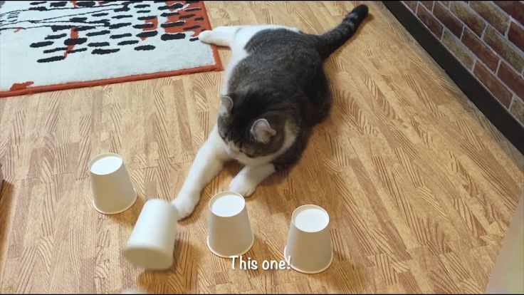 Ran Across this Cute Cat Video (Glad I Did!)